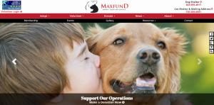 web-design-for-animal-adoption